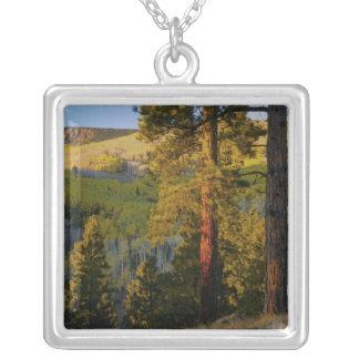UTAH. Ponderosa pines & aspen, autumn. Sunrise, Silver Plated Necklace