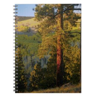 UTAH. Ponderosa pines & aspen, autumn. Sunrise, Spiral Notebook