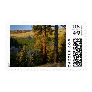 UTAH. Ponderosa pines & aspen, autumn. Sunrise, Stamp