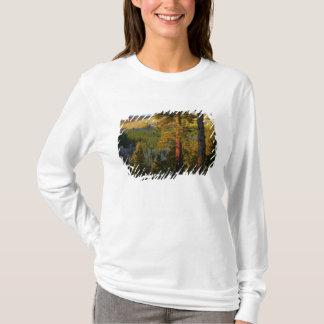 UTAH. Ponderosa pines & aspen, autumn. Sunrise, T-Shirt