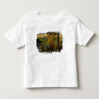 UTAH. Ponderosa pines & aspen, autumn. Sunrise, Toddler T-shirt