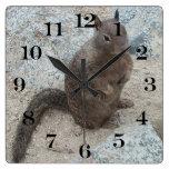 Utah rock squirrel clock