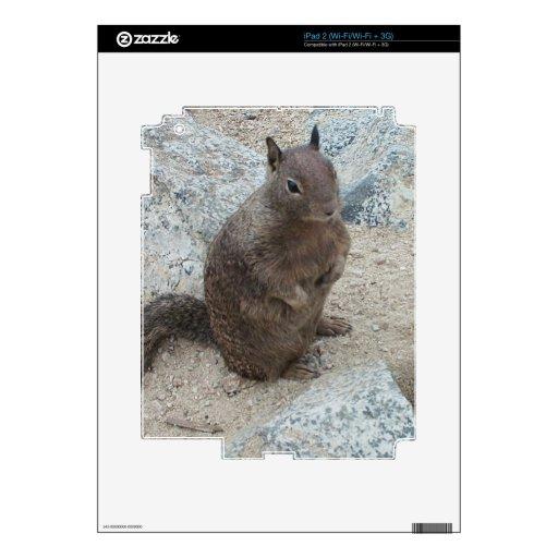 Utah rock squirrel decal for iPad 2