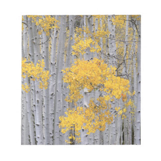 UTAH. USA. Aspen grove (Populus tremuloides) in Notepad