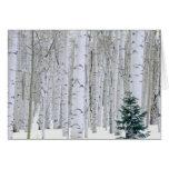 UTAH. USA. Aspen (Populus tremuloides) & Douglas Greeting Cards
