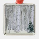 UTAH. USA. Aspen (Populus tremuloides) & Douglas Christmas Ornament
