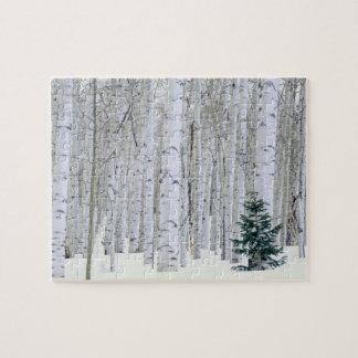 UTAH. USA. Aspen (Populus tremuloides) & Douglas Puzzles