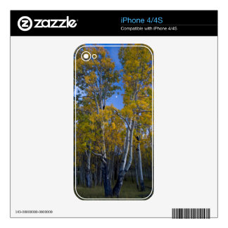 Utah. USA. Aspen Trees And Moon At Dusk Decal For The iPhone 4S
