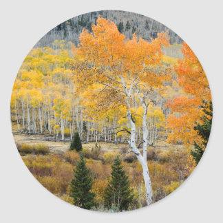 Utah, USA. Aspen Trees And Willow Thickets Classic Round Sticker