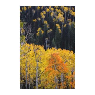 Utah. USA. Aspen Trees In Autumn On The Sevier Canvas Print