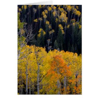 Utah. USA. Aspen Trees In Autumn On The Sevier Card