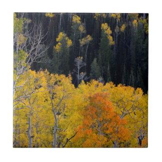 Utah. USA. Aspen Trees In Autumn On The Sevier Ceramic Tile