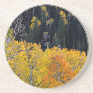 Utah. USA. Aspen Trees In Autumn On The Sevier Drink Coaster
