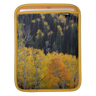 Utah. USA. Aspen Trees In Autumn On The Sevier iPad Sleeve