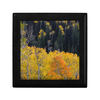 Utah. USA. Aspen Trees In Autumn On The Sevier Jewelry Box