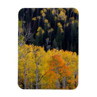 Utah. USA. Aspen Trees In Autumn On The Sevier Magnet