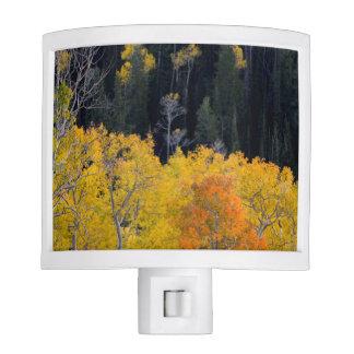 Utah. USA. Aspen Trees In Autumn On The Sevier Night Light