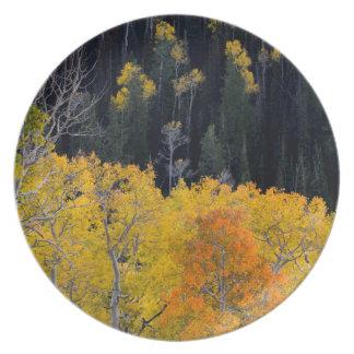 Utah. USA. Aspen Trees In Autumn On The Sevier Plate