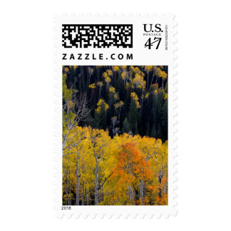 Utah. USA. Aspen Trees In Autumn On The Sevier Postage