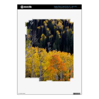 Utah. USA. Aspen Trees In Autumn On The Sevier Skins For iPad 3
