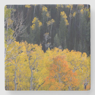 Utah. USA. Aspen Trees In Autumn On The Sevier Stone Coaster