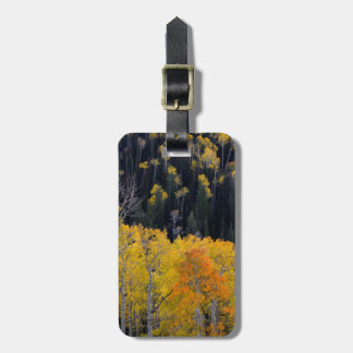 Utah. USA. Aspen Trees In Autumn On The Sevier Tag For Luggage