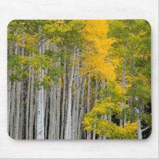 Utah. USA. Aspen Trees (Populus Tremuloides) Mouse Pad