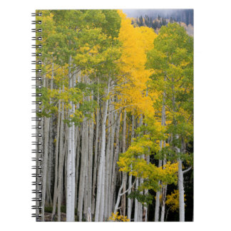 Utah. USA. Aspen Trees (Populus Tremuloides) Notebook