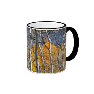 Utah, USA. Aspen Trees (Populus Tremuloides) Ringer Mug