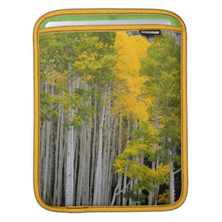 Utah. USA. Aspen Trees (Populus Tremuloides) Sleeve For iPads