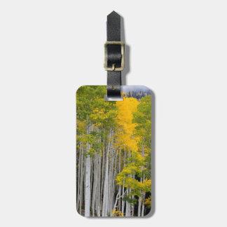 Utah. USA. Aspen Trees (Populus Tremuloides) Tag For Luggage