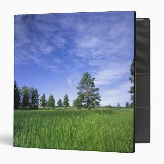 UTAH. USA. Ponderosa pines Pinus ponderosa) & Binder