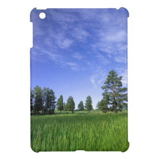 UTAH. USA. Ponderosa pines Pinus ponderosa) & iPad Mini Covers