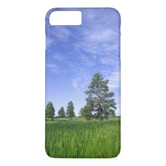 UTAH. USA. Ponderosa pines Pinus ponderosa) & iPhone 8 Plus/7 Plus Case