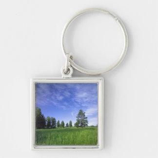 UTAH. USA. Ponderosa pines Pinus ponderosa) & Silver-Colored Square Keychain