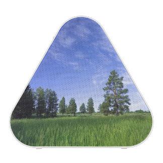 UTAH. USA. Ponderosa pines Pinus ponderosa) & Speaker