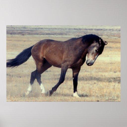 Utah Wild Mustang Poster