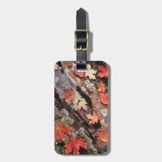 Utah, Zion National Park, Patterns of autumn Bag Tag