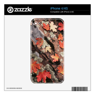 Utah, Zion National Park, Patterns of autumn iPhone 4 Decals