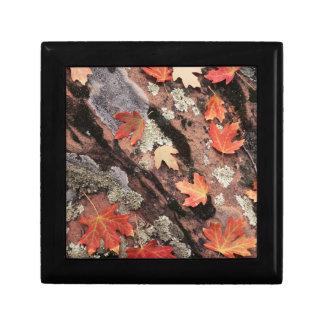 Utah, Zion National Park, Patterns of autumn Jewelry Box