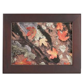 Utah, Zion National Park, Patterns of autumn Keepsake Box