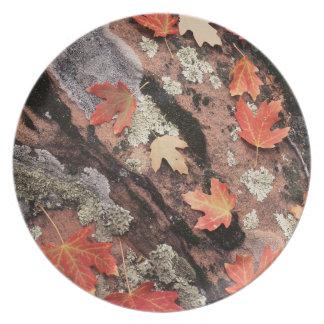 Utah, Zion National Park, Patterns of autumn Plate