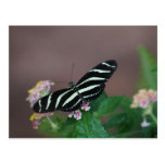 utterfly mariposas tarjetas postales