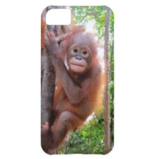 Uttuh Baby Orangutan in Jungle Case For iPhone 5C