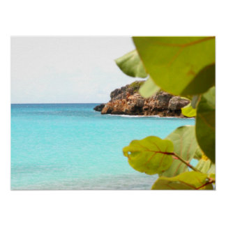 Uva de Playa Posters