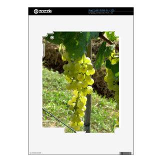 Uvas blancas en la vid iPad 2 calcomanía