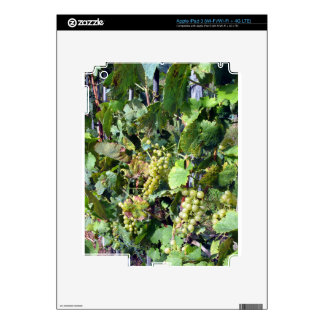 Uvas blancas en un viñedo iPad 3 pegatinas skins