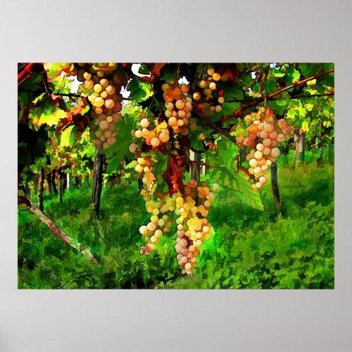 Uvas colgantes en las vides posters