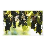 uvas de Francia Impresiones En Lienzo Estiradas