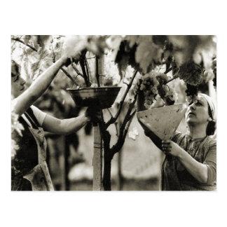 Uvas de la cosecha de la elaboración de vino tarjetas postales